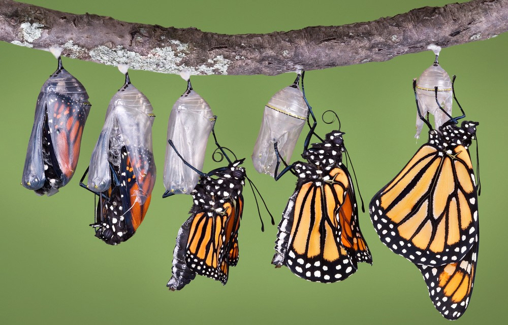 Marriage Counseling Fort Myers - Butterflies